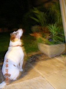 Milo on possum watch