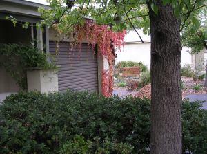 Reclaiming garden