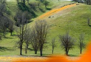 poppy-hills