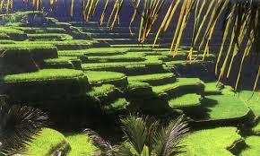 Near Ubud, Bali