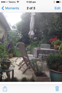 More Salvia