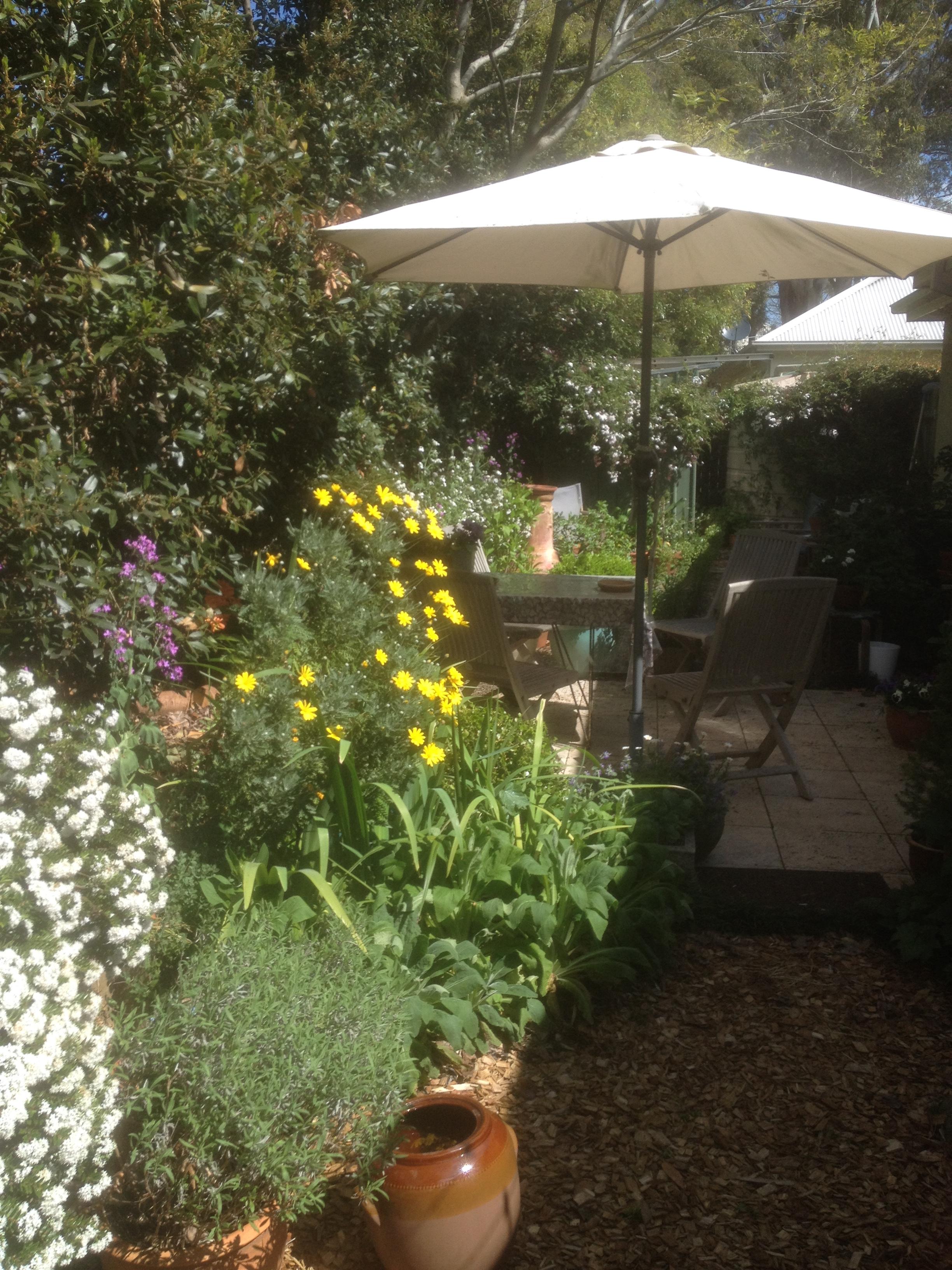 IMG_0659flowering garden
