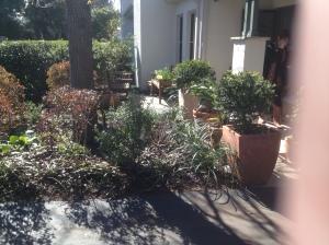 IMG_0918 front garden August 2016
