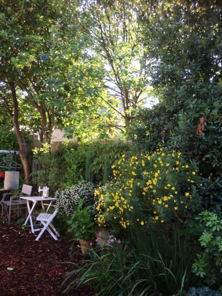 IMG_0178our garden