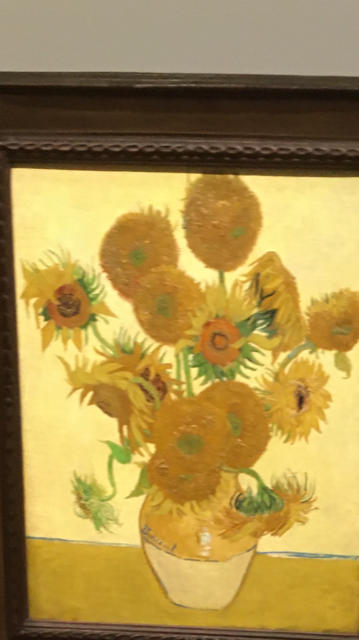 IMG_1860 13 Sunflowers